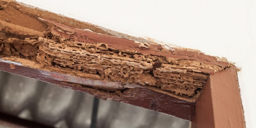The Truth About Timber Pests and Damage 1
