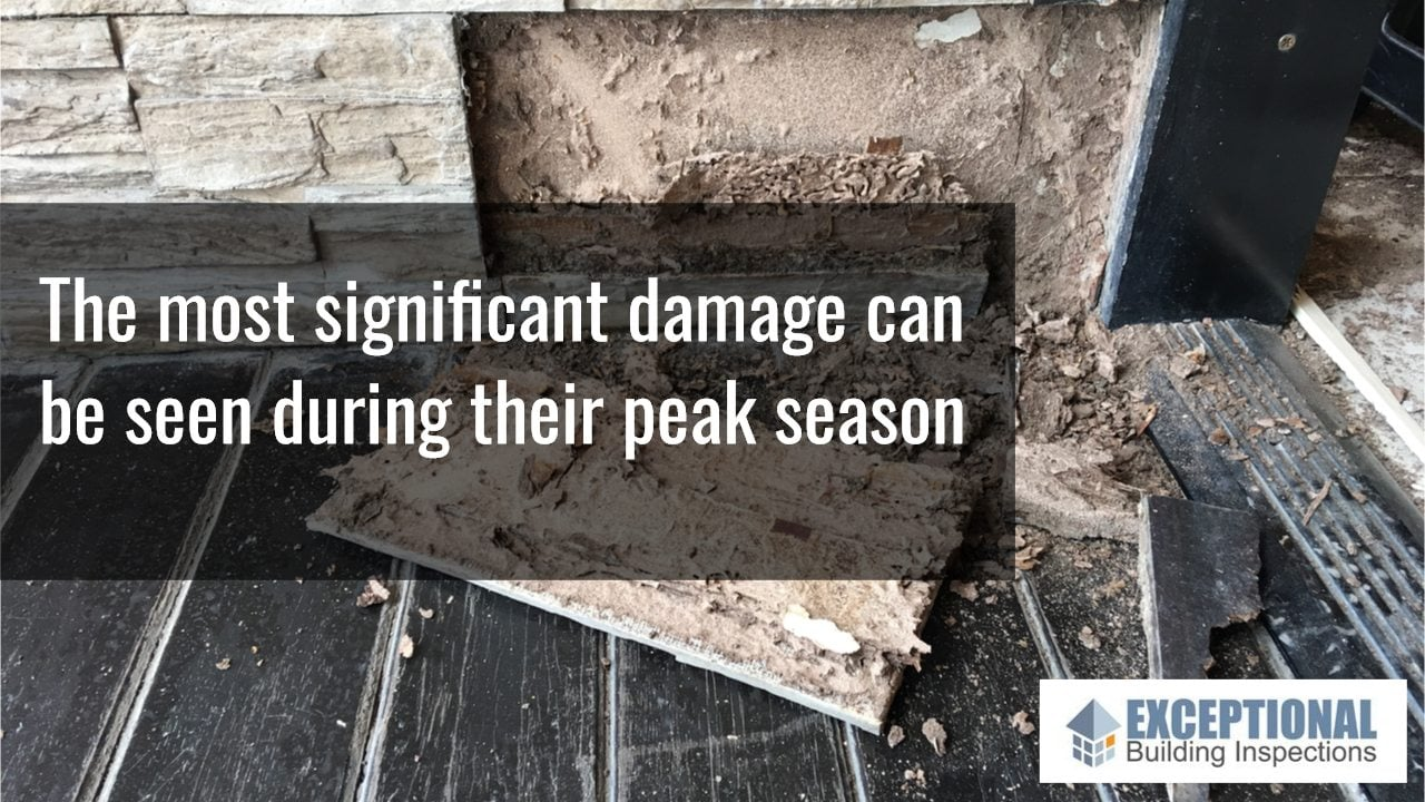 Summer is the Perfect Time for a Termite Inspection -