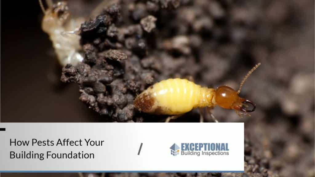 How Pests Affect Your Building Foundation 1